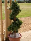 Artificial trees for hire